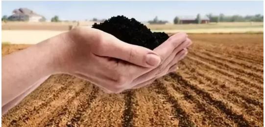 国际上都不承认这种肥料,却在我国炒得火热,价格高得离谱